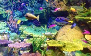 水族館|初デート