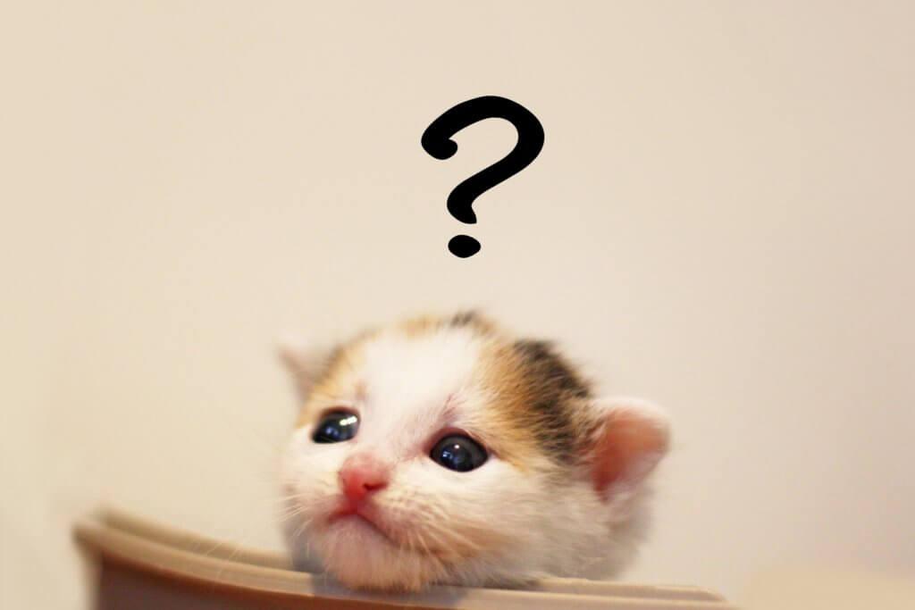 あれ?悩む子猫